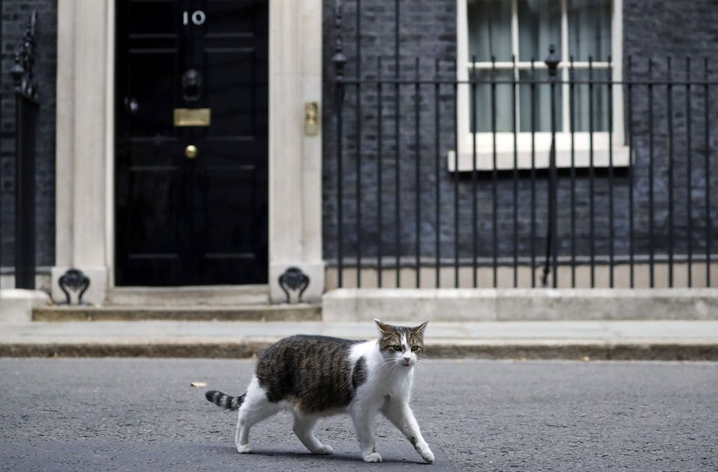 In der Premier-Residenz in der Downing Street in England gibt es nun sogar zwei Haustiere. Hauskater Larry, der fest in der Downing Street wohnt, hat nun Zuwachs bekommen. Foto: AFP