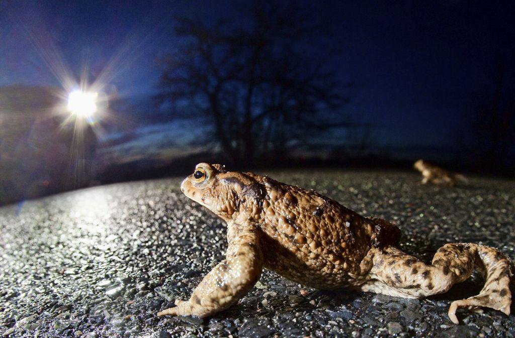 In Bereichen, in denen mehrere Tausend Tiere zu  erwarten sind, werden Schutzmaßnahmen getroffen. Foto: dpa
