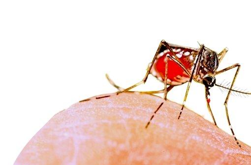 Beim Sex Zika-Virus übertragen