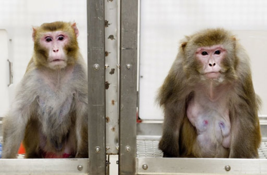 Die Tierversuche im Tübinger Max-Planck-Institut stehen unter genauer Beobachtung. Foto: dpa