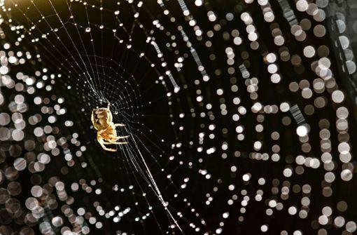 Der Herbst ist Spinnenzeit