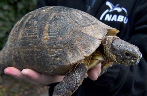 Schildkröte im Straßenverkehr unterwegs