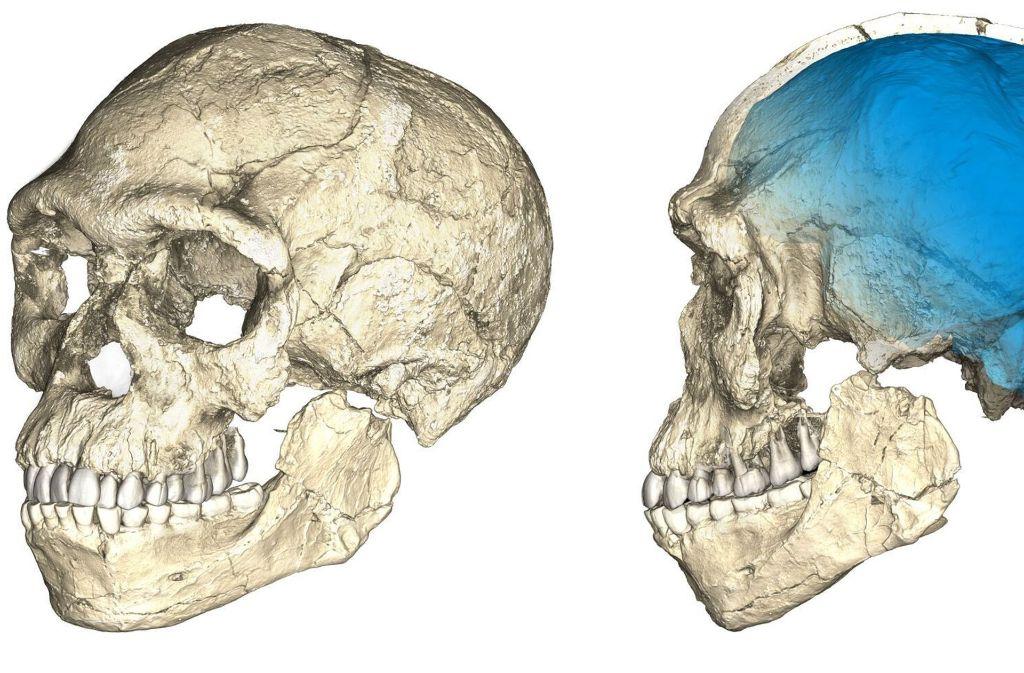 Die Computeranimation zeigt die Rekonstruktion eines Schädels des frühesten bekannten Homo sapiens. Foto: