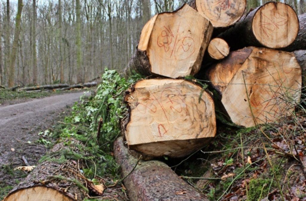 Derzeit liegen stapelweise gefällte Bäume neben den Wegen im Haldenwald. Foto: Stahlberg