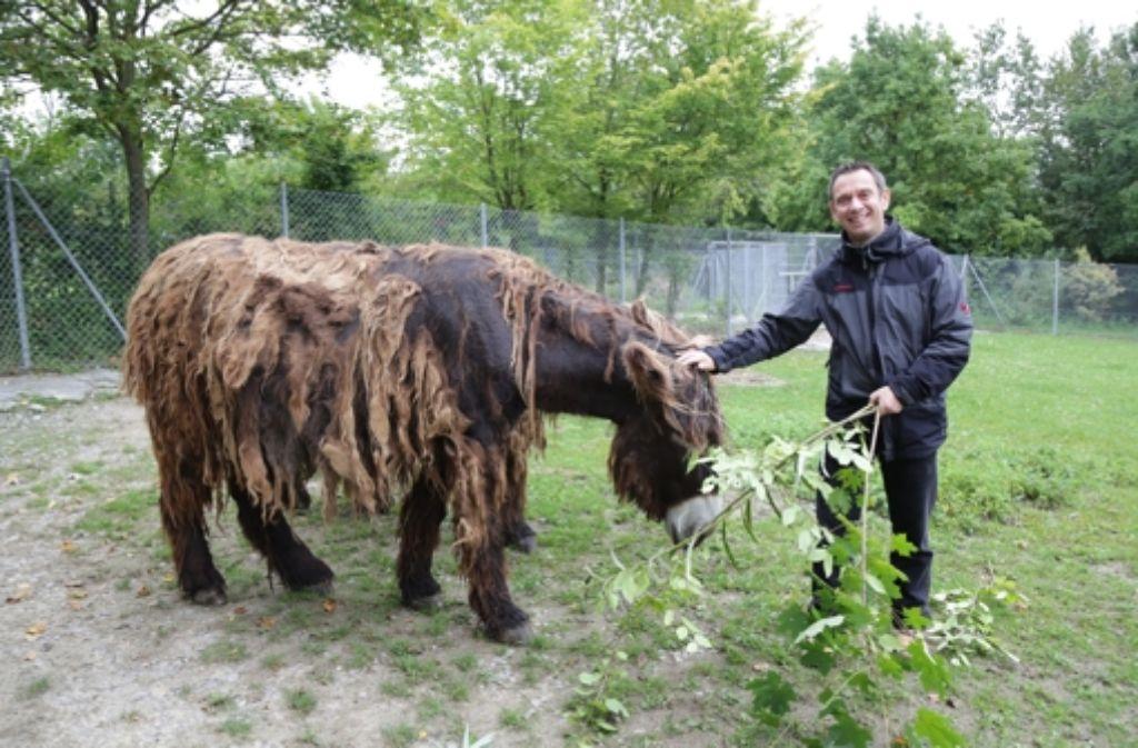 Wilhelma-Direktor Thomas Kölpin mit einer der Poitou-Eselstuten. Foto: Patricia Sigerist