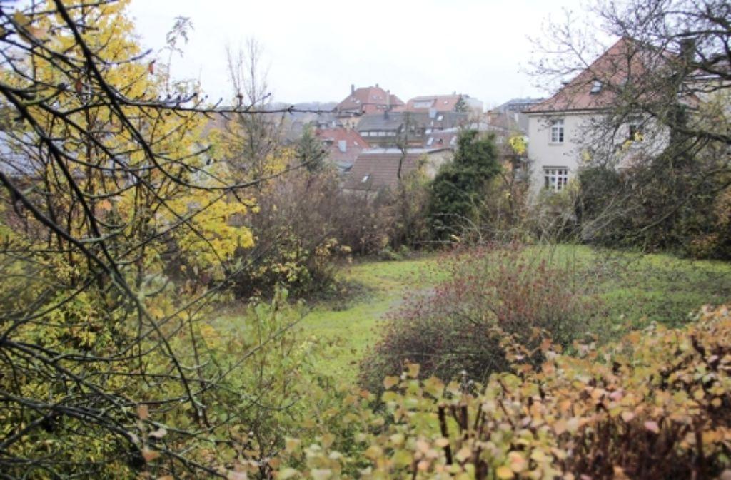 Die Stadt hat zwei Grundstücke an der Elsässer Straße gekauft. Sie grenzen direkt an das Gebäude Lothringer Straße 13A (rechts im Hintergrund). Foto: Bernd Zeyer