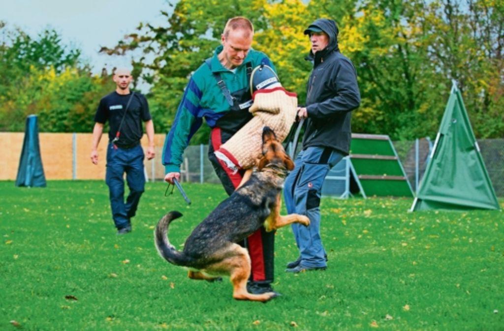 Die Diensthunde schützen ihren Hundeführer und stellen Flüchtige. In Göppingen ist das landesweit einzige Trainings- und Kompetenzzentrum Polizeihundeführer angesiedelt. Es befindet sich unter dem Dach des neuen Polizeipräsidiums Einsatz. Foto: Horst Rudel