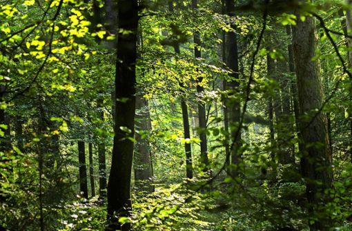 Waldbeirat soll Wogen wegen Baumfällpraxis glätten
