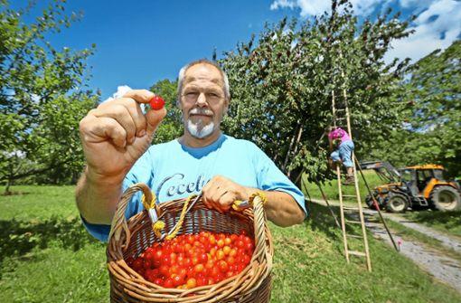 Obstbauern haben alle Hände voll zu tun