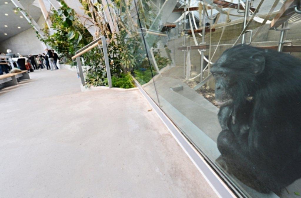 Die Baumängel am neuen Affenhaus in der Wilhelma sind noch nicht behoben. Foto: dpa