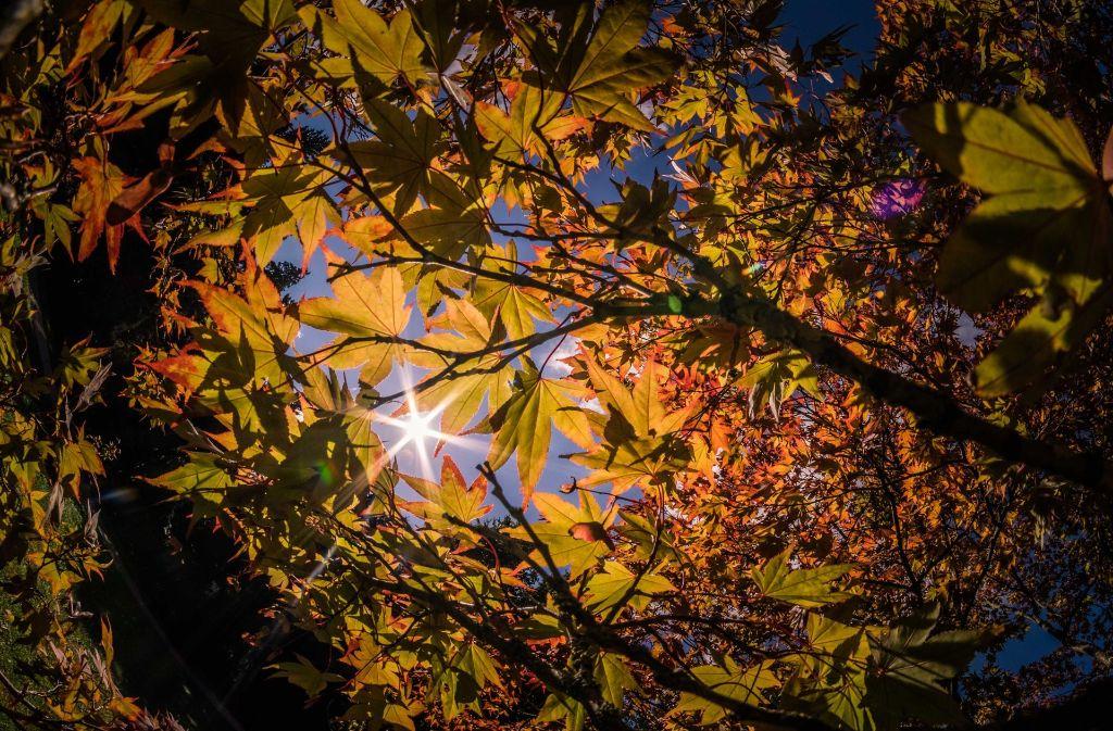 Ob der Herbst 2017 viele goldene Tage bereit hält, lässt sich schwer sagen. Ein paar Aussagen sind allerdings möglich. Foto: Max Kovalenko
