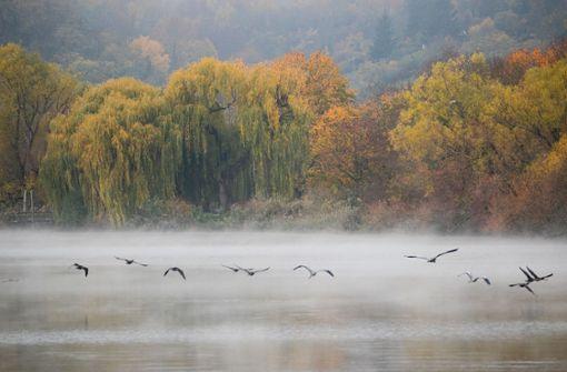 Nebel und Kälte beherrschen den Südwesten
