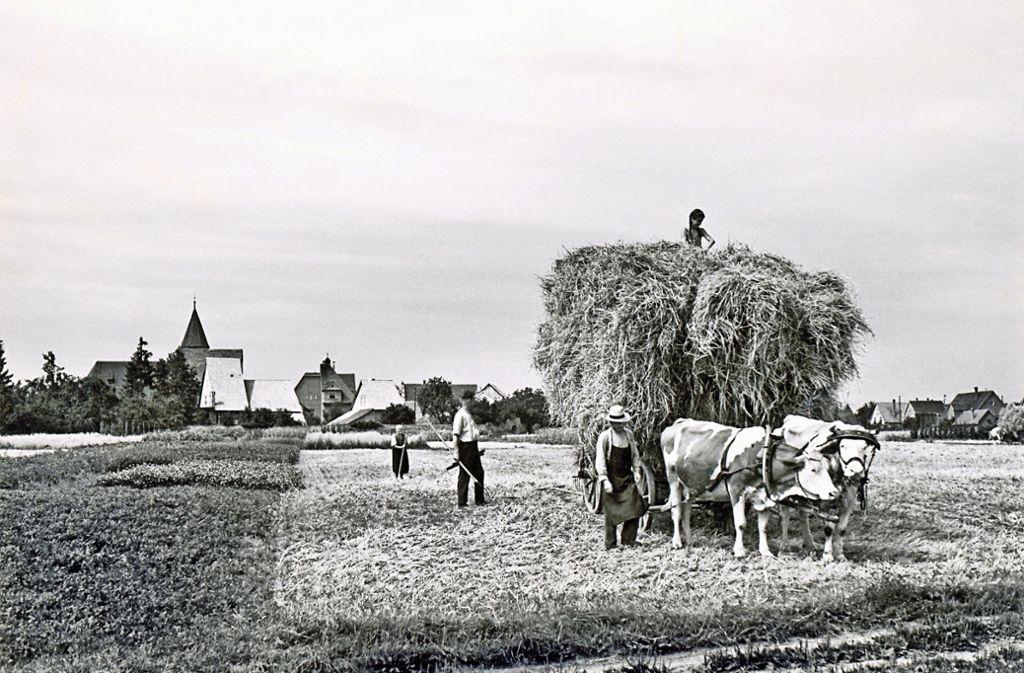 Die Landwirtschaft, hier eine Ernteszene aus dem Jahr 1946 mit dem Klosterhof im Hintergrund,  spielte in Nellingen  einst eine große Rolle. Foto: Stadtarchiv Ostfildern
