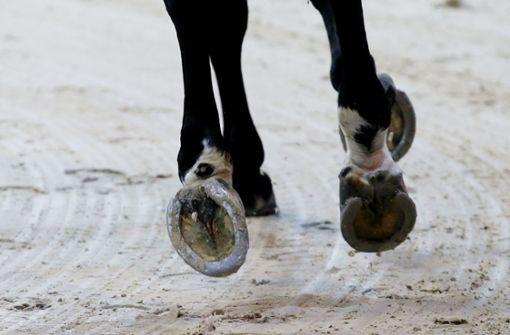 Radfahrer bei Unfall mit Pferd schwer verletzt