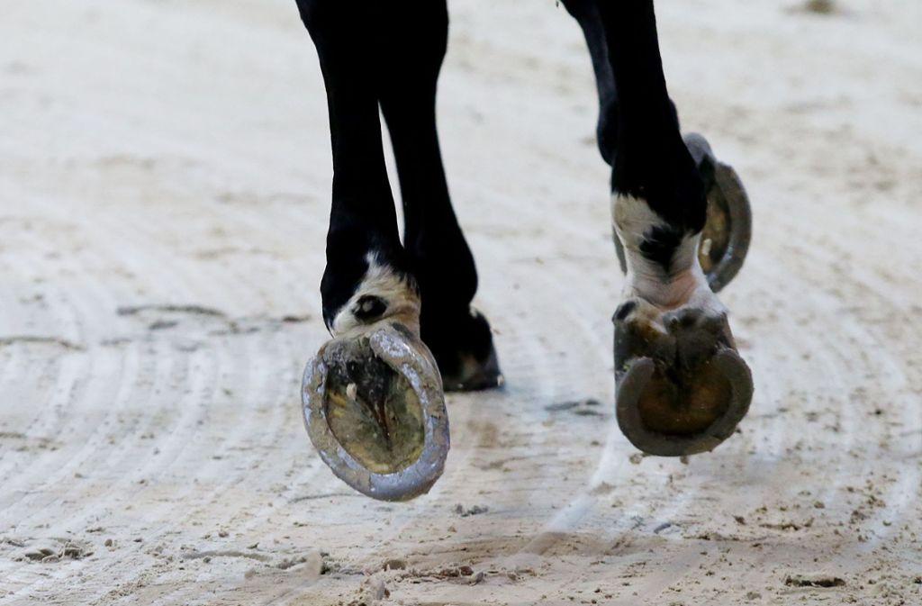 Das Pferd begann rückwärts zu laufen und berührte den Radler, der daraufhin zu Fall kam. Foto: Pressefoto Baumann