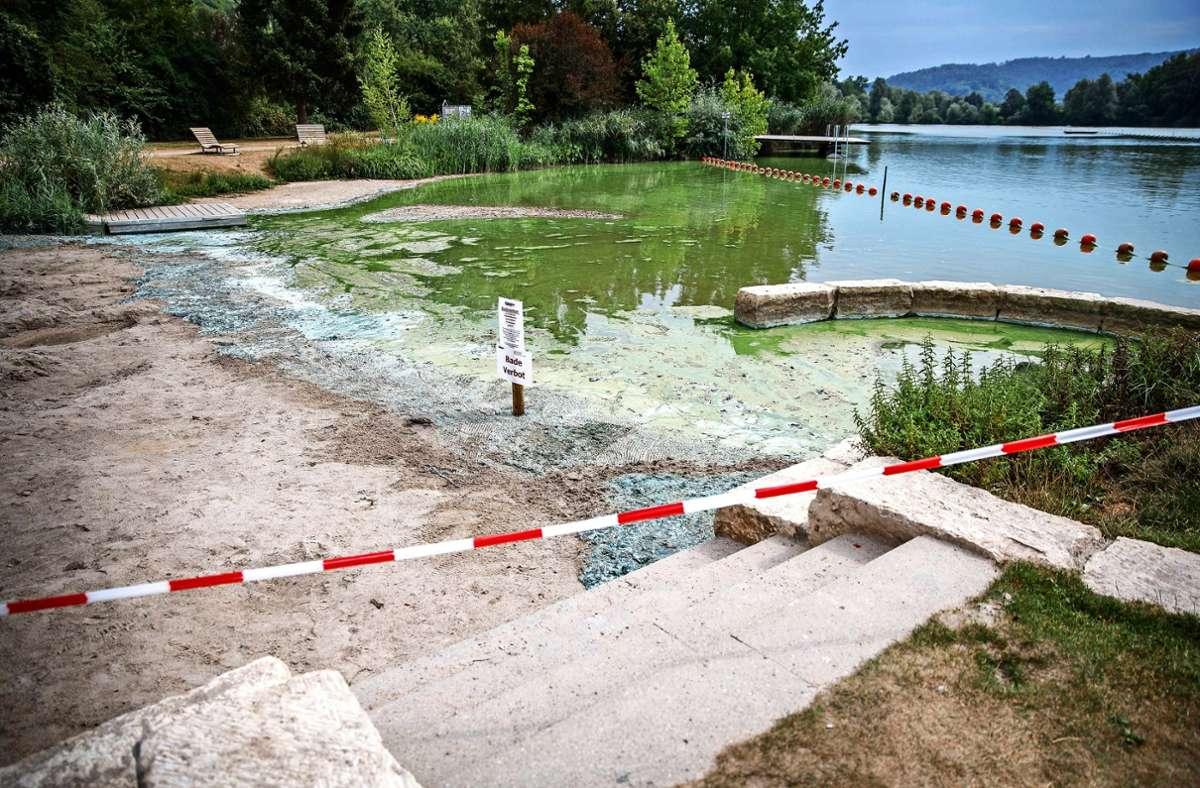 Im Plüderhäuser Badesee haben sich Blaualgen ausgebreitet. Foto: Gottfried Stoppel