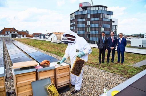 Imker vermietet Bienenvölker an Firmen