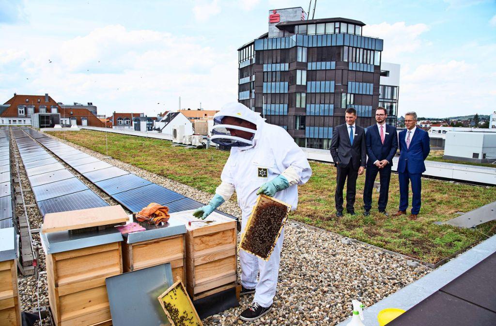 Neue Mitarbeiter auf dem Dach der Kreissparkasse: Während  Frank Geggus  fünf Bienenvölker aufstellt, schauen  der fürs Marketing zuständige Daniel Wengenroth (von links), der Nachhaltigkeitsbeauftragte  Sascha Sarrazin und der Vorstandsvorsitzende Detlef Schmidt  aus sicherer Entfernung zu. Foto: