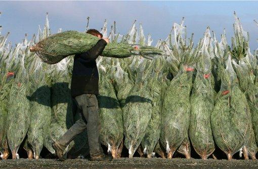 250 Christbäume gestohlen