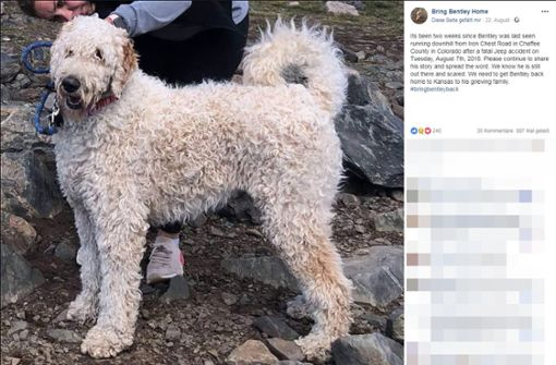 Hundewelpe Bentley nach Autounfall spurlos verschwunden