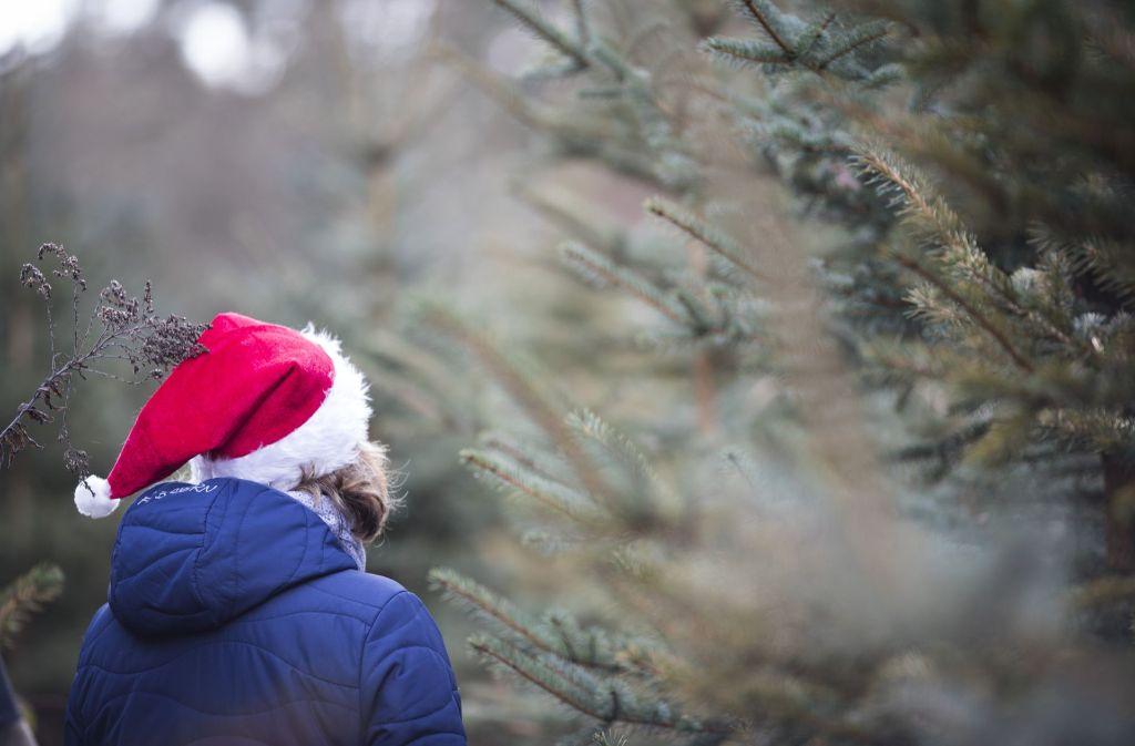 tipps zum weihnachtsbaum so berlebt ihr b umchen die. Black Bedroom Furniture Sets. Home Design Ideas