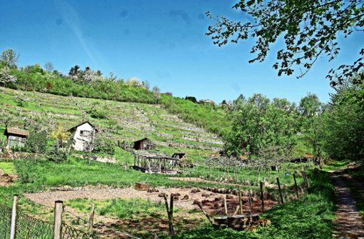 5000 Euro  für Weinbaugutachten bewilligt