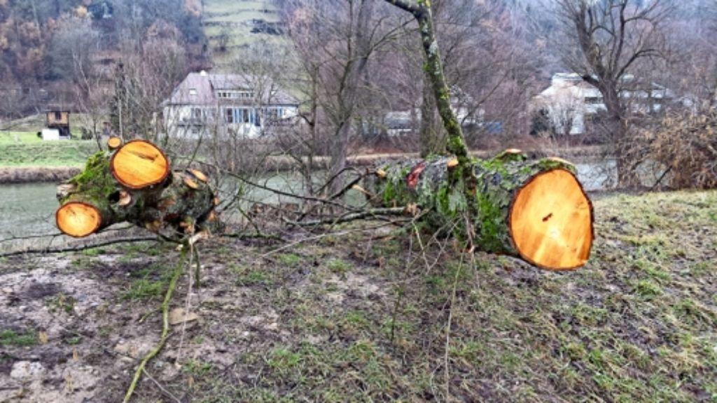 Gefällt für den Hochwasserschutz  am Neckar – Bäume  beim Klärwerk Foto: Petersen