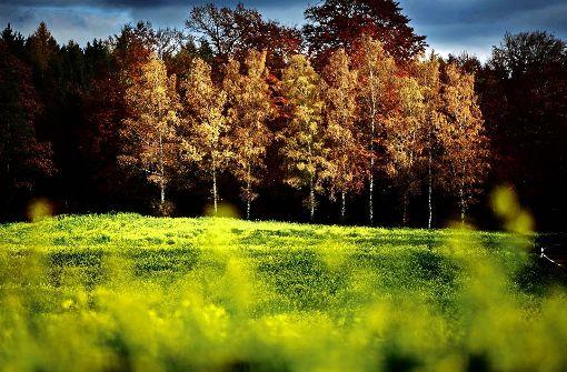 Darum freuen wir uns auf die goldene Jahreszeit