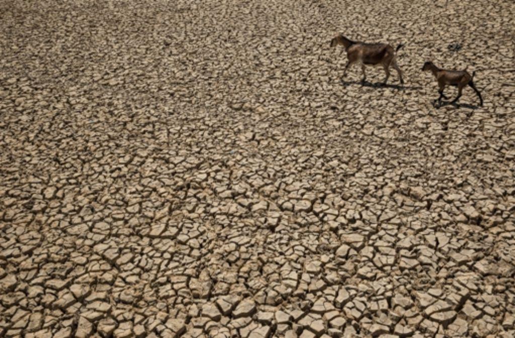In Indonesien herrscht Dürre. Foto: Getty Images AsiaPac