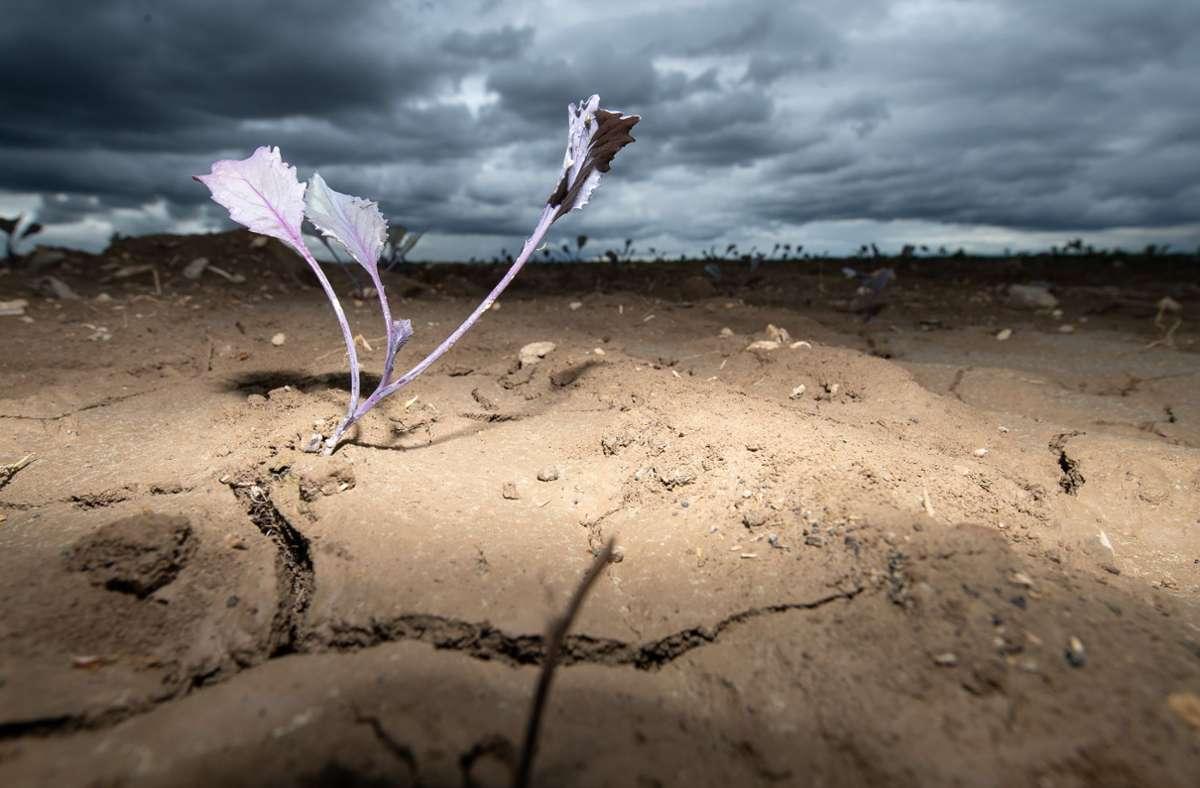 Dunkle Wolken ziehen über ein Feld mit jungen Pflanzen. Die Böden sind durch Wassermangel und Hitze – wie hier im April 2020 auf einem Feld in Filderstadt  – aufgrund von Trockenheit mit Rissen durchzogen. Foto: Sebastian Gollnow/dpa