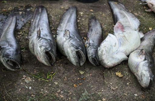 Peta will Mahnmal für tote Fische