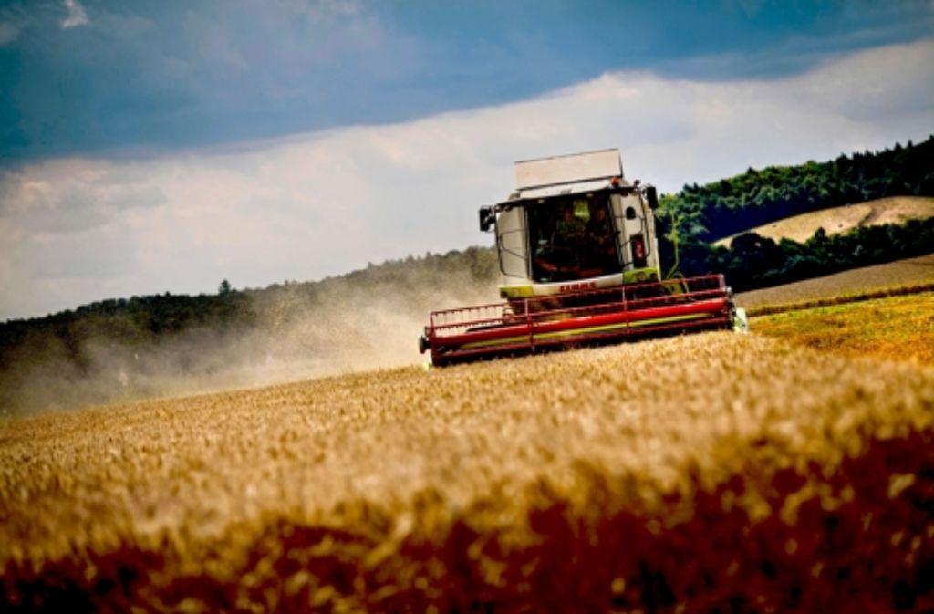 Im August ernten viele Bauern ihre Weizen-Felder. Wie viel Geld sie dafür bekommen, können die Landwirte Monate vorher über Terminkontrakte an der Börse regeln. Foto: dpa