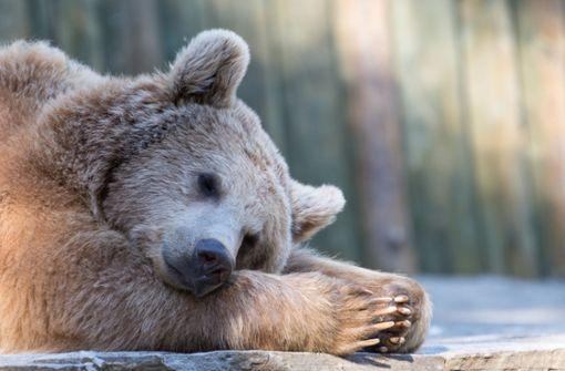 Was wir von Bären lernen können