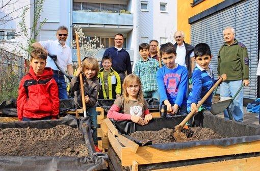 Grundschüler bauen Gemüse an