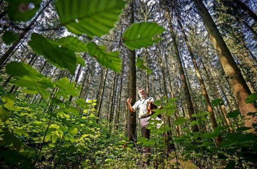 Grillstellen  im Wald sind wegen Brandgefahr gesperrt