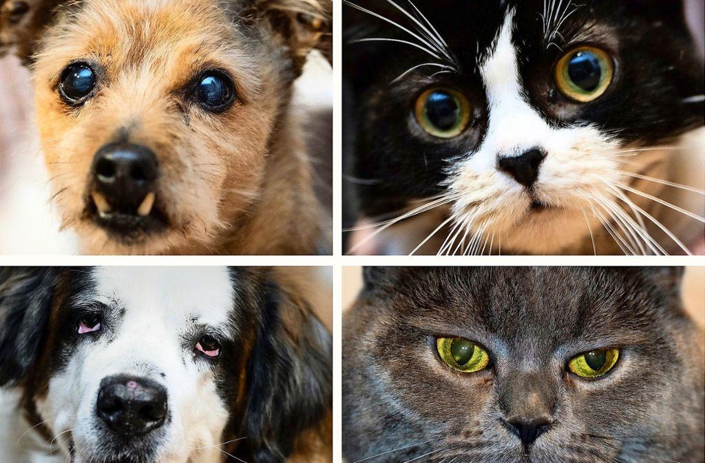 Wie beeinflussen Haustiere – insbesondere Hunde und Katzen – das Wohlbefinden ihrer Besitzer? Das versuchen US-Forscher herauszufinden. Foto: dpa/Peter Steffen