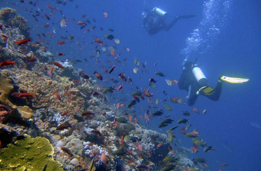 Mit dem Schutz der Meere beschäftigt sich derzeit eine UN-Konferenz in New York (Archivbild). Foto: AP