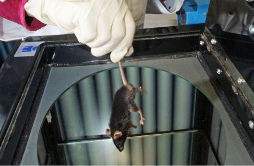 Tierversuche sollen die Ausnahme werden