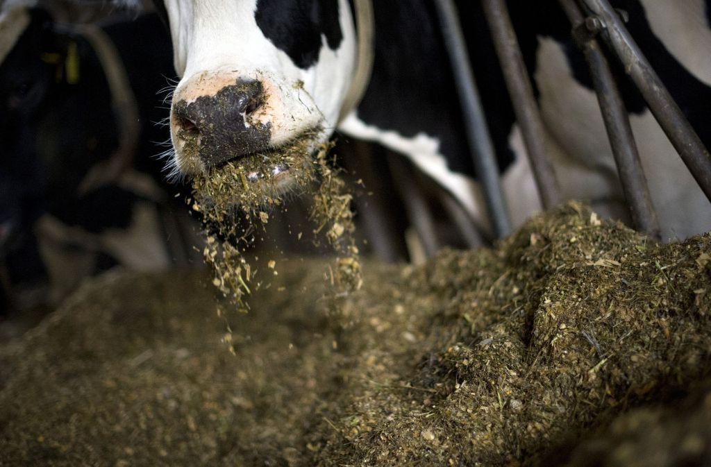 Ein Landwirt muss sich wegen Verstößen gegen das Tierschutzgesetz verantworten. Foto: dpa