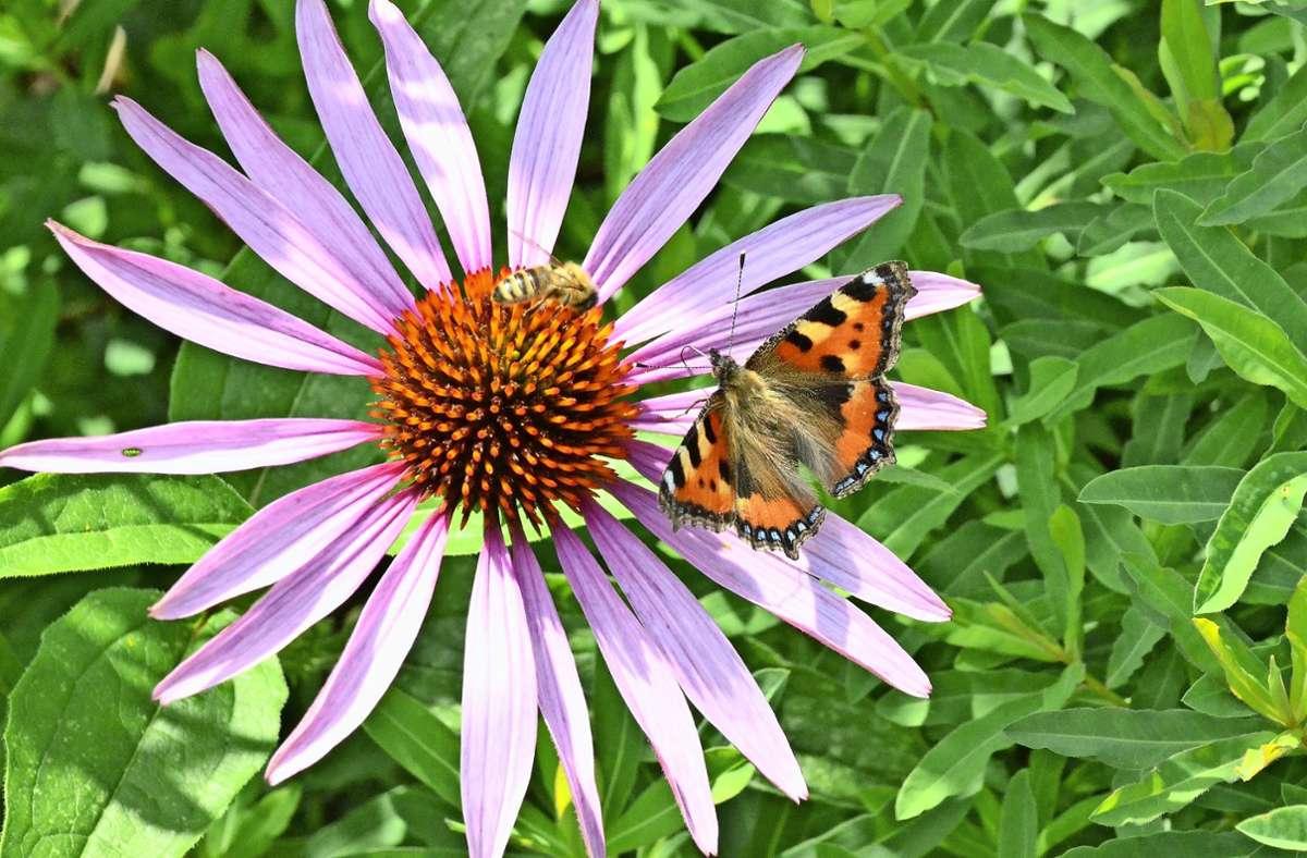 Auch auf kleinster Fläche ist es möglich, Nahrung und Lebensraum für Bienen, Schmetterlinge und Co. zu schaffen. Foto: Hintermayr