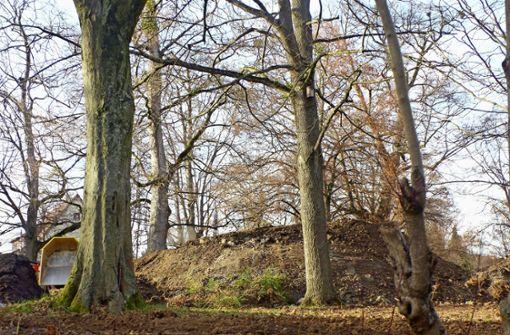 Im Schlosspark wird Arsen entdeckt