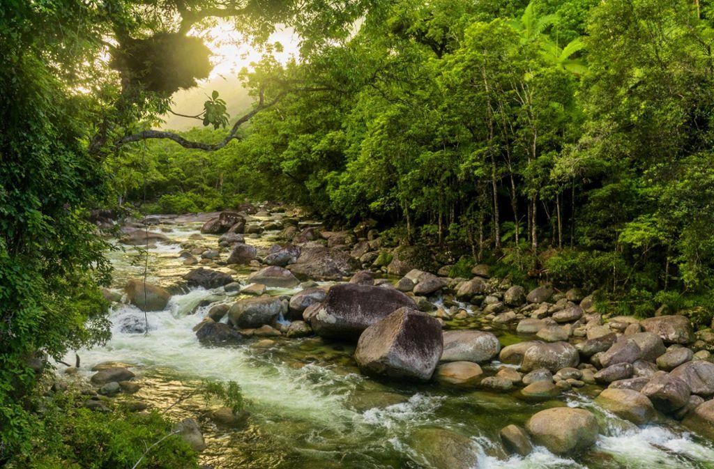 Ein 29-Jähriger war drei Wochen im australischen Regenwald verschwunden. (Symbolbild) Foto: Shutterstock/Martin Valigursky