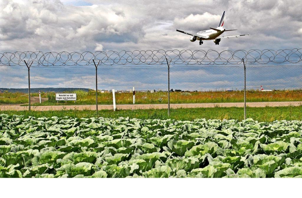 Der Flughafen und die Filderkautfelder liegen in unmittelbarer Nachbarschaft. Mit Kontaminationen sei dennoch nicht zu rechnen, sagen Fachleute. Foto: Horst Rudel