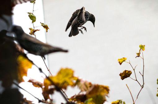 Mehr als 1.000 Vögel fallen tot vom Himmel