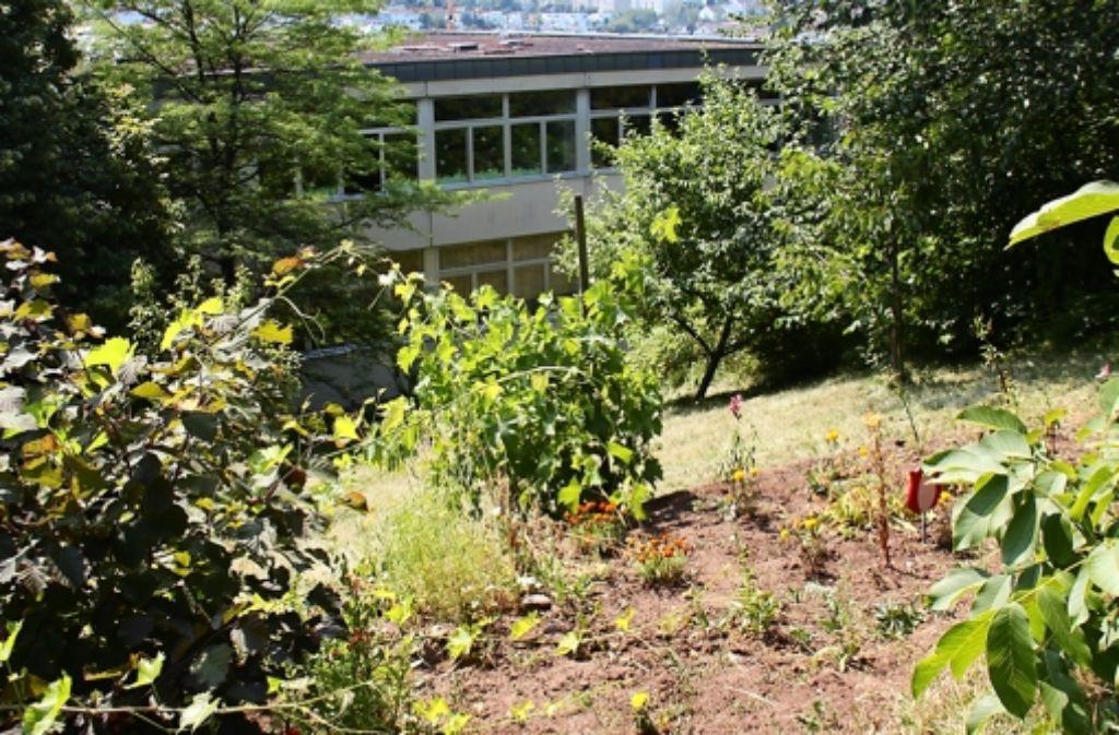 Hinter der Kirchhaldenschule befindet sich auf einem Hügel noch ein kleines Gärtchen. Dort soll aber möglichst bald das Kinderhaus gebaut werden. Foto: Torsten Ströbele