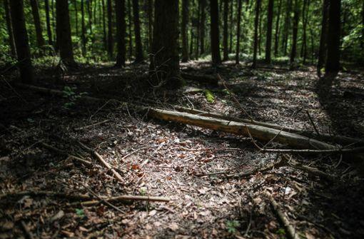 Pilzsammler finden  Koffer mit Leiche