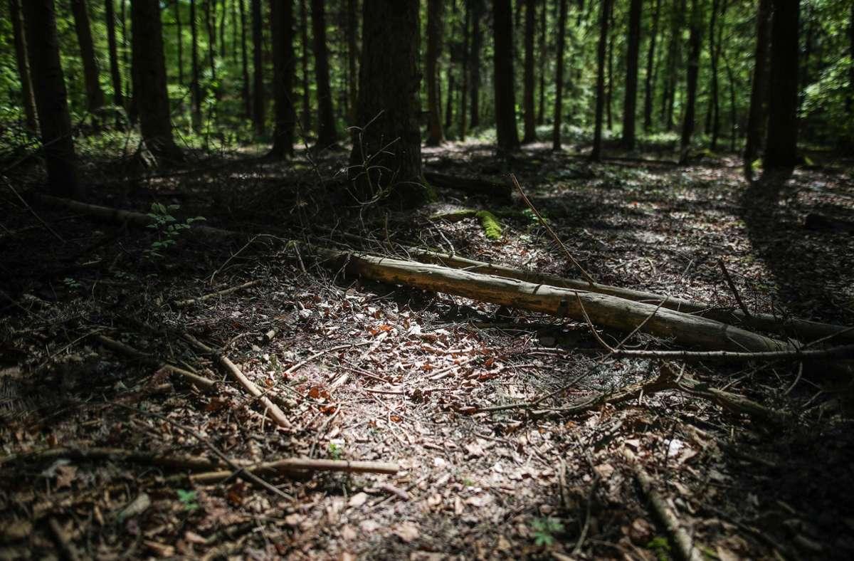 Im Wald finden die Sammler nicht nur Pilze, sondern auch eine Leiche in einem Koffer (Symbolbild). Foto: dpa/Christoph Schmidt