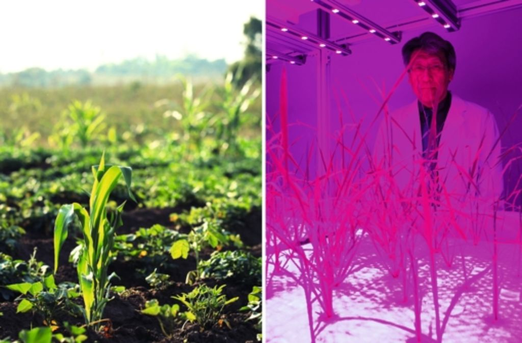 """Schöne Natur hie, gruseliges Labor da – der Dokumentarfilm """"10 Milliarden"""" macht sich die Frage nach der Zukunft der Welternährung schon ein wenig sehr einfach. Foto: 24 Bilder"""