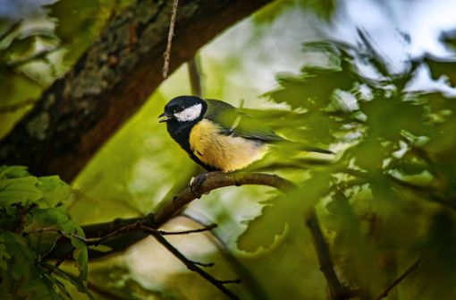 Stunde der Gartenvögel schlägt wieder