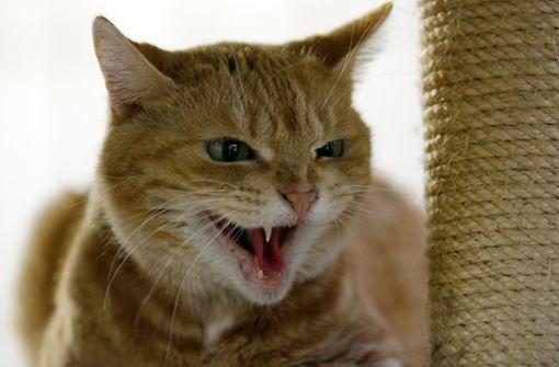Einbrecher stehlen Katze und Sittich